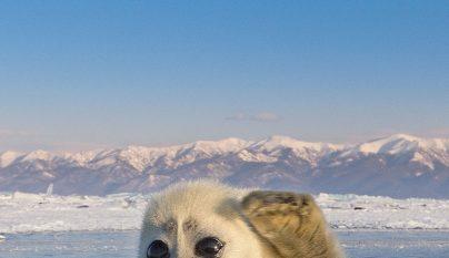 foca-bebe1