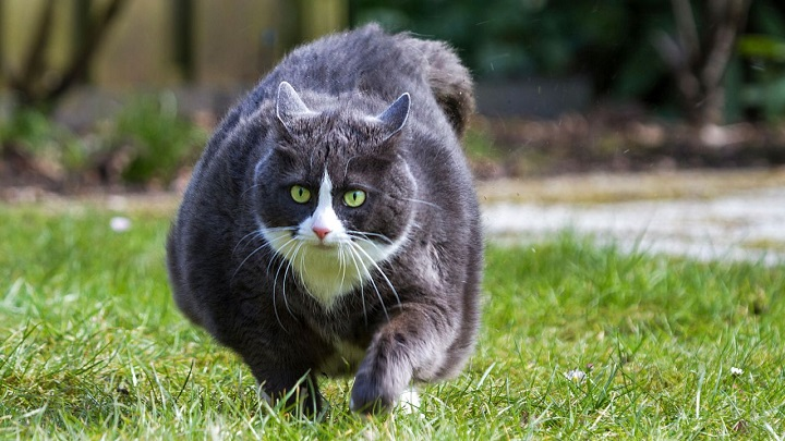 error-gato1