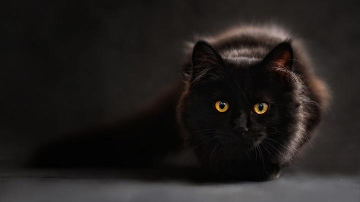 gato-negro-mala-suerte1