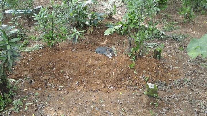 gato-tumba