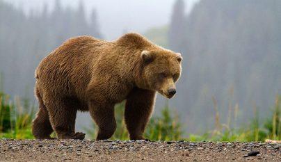 oso-fosa-septica