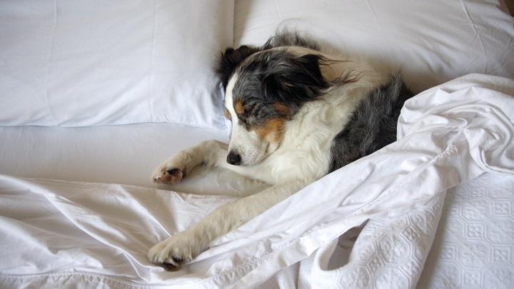 perro-cama