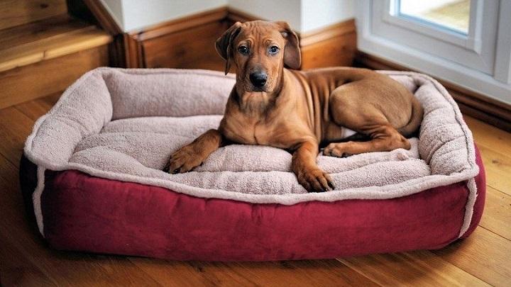 perro-cama1