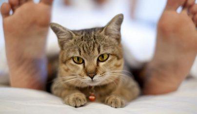 vida-con-y-sin-gato