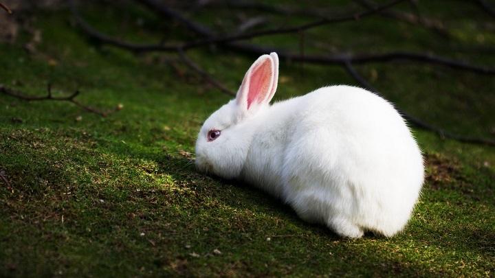 conejo-errores