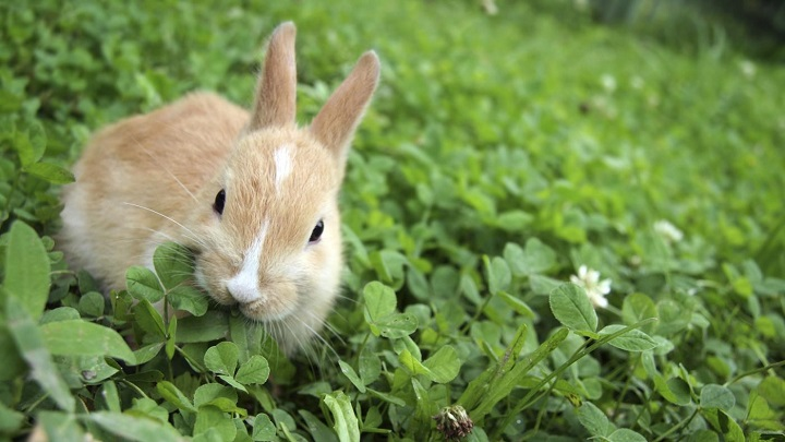 conejo-errores1