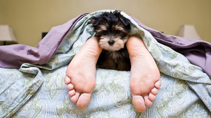 dormir-con-perro-consejos