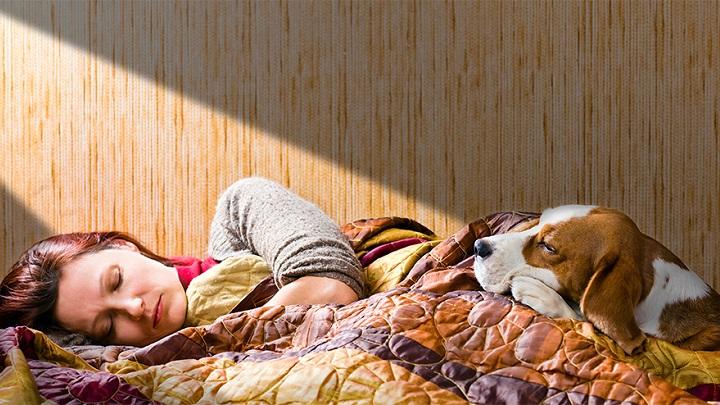 dormir-con-perro-consejos1