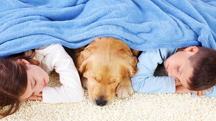 dormir-mascotas1