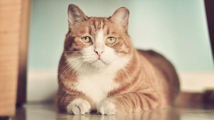 errores-alimentacion-gatos1