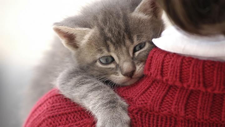 gato-abrazo