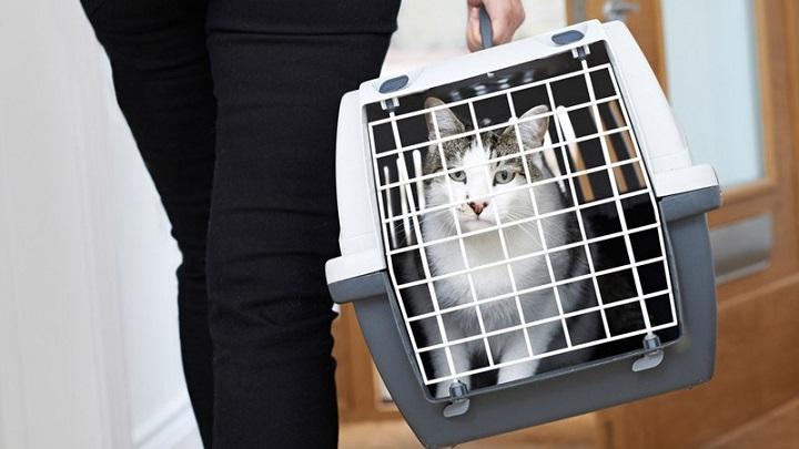 gato-transportin