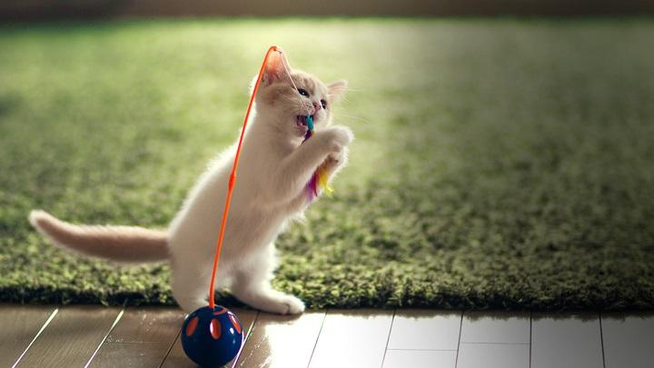 llevarse-bien-gato1