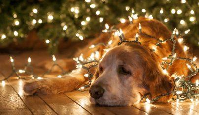 navidad-mascotas