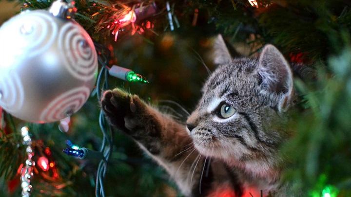 navidad-mascotas1