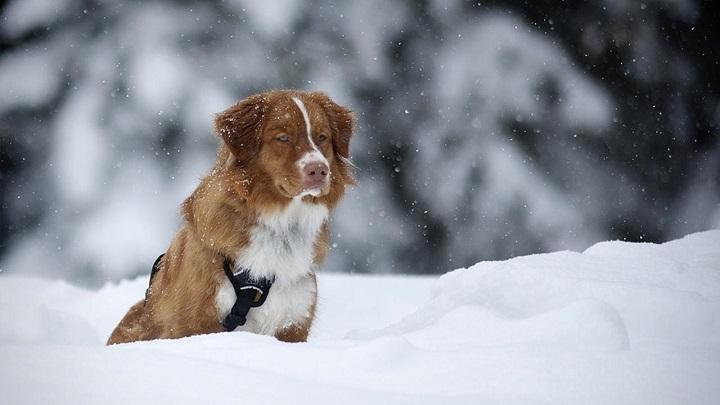 perro-atrapado-hielo