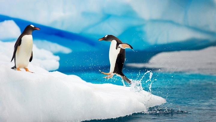 pinguino-miedo