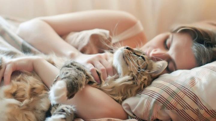 dormir-gato