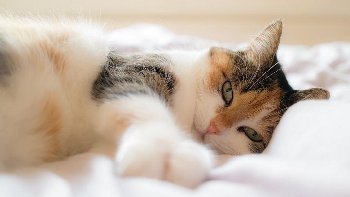 dormir-gato1