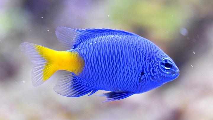 errores-peces