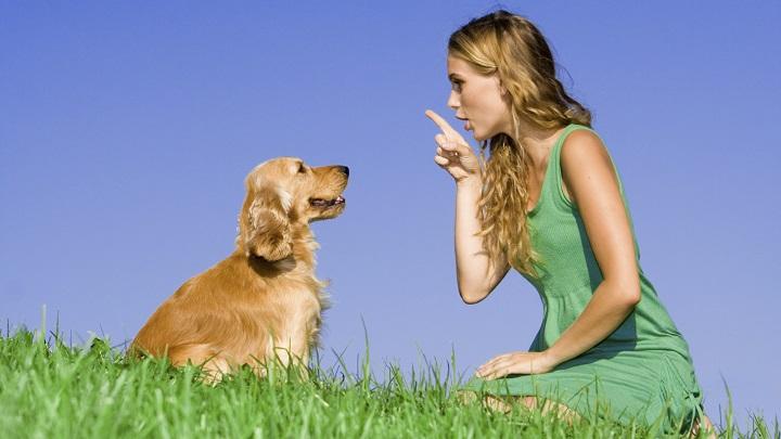 hablar-al-perro