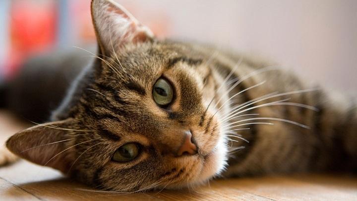 gato-sintomas