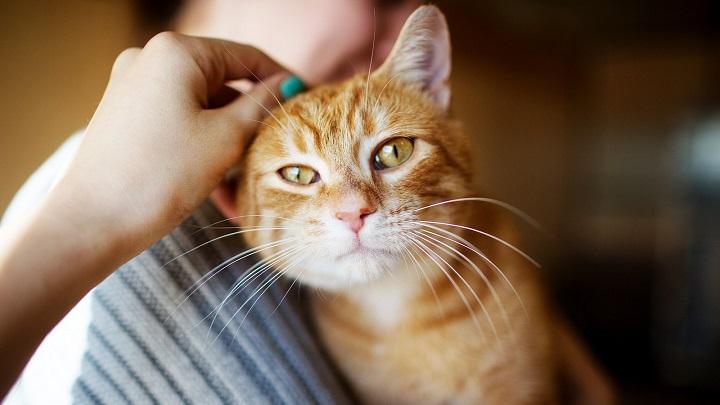 gato-sintomas1
