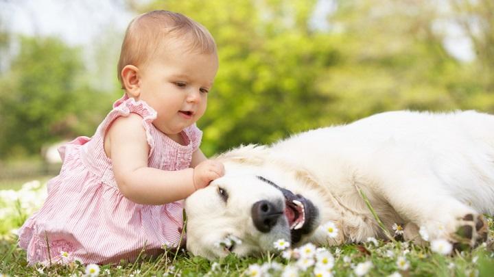 mascotas-bebe