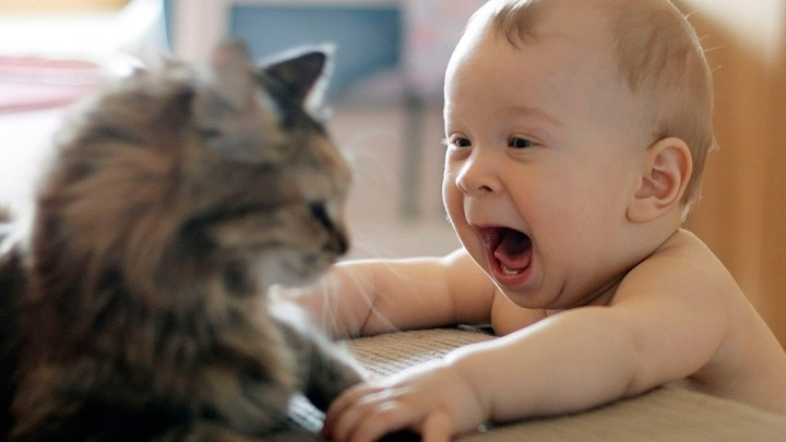 mascotas-bebe1