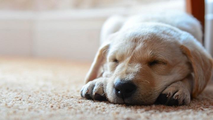 perro-dormir