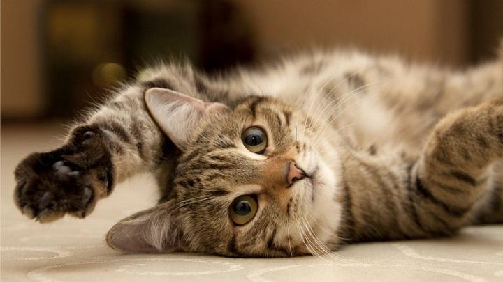 castings-gatos