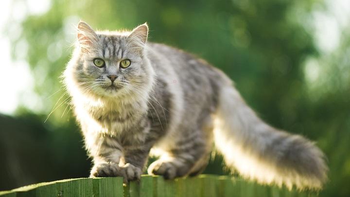 castings-gatos1