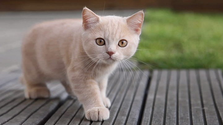 cuidados-pelo-gato