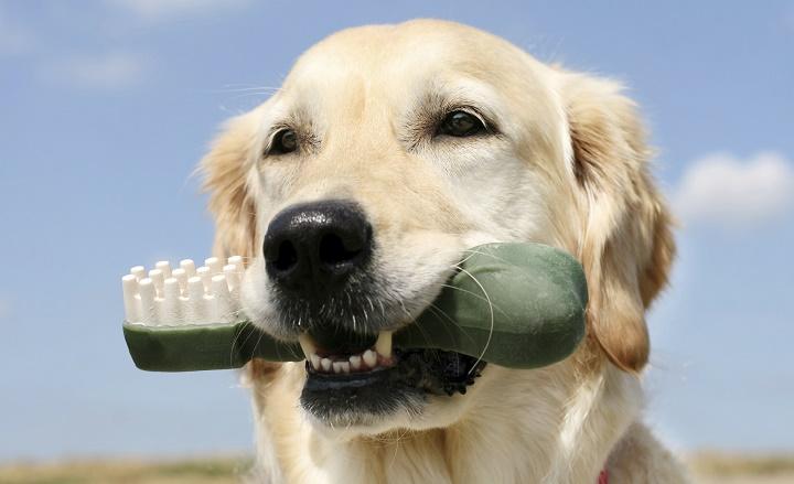 perro-higiene-bucal