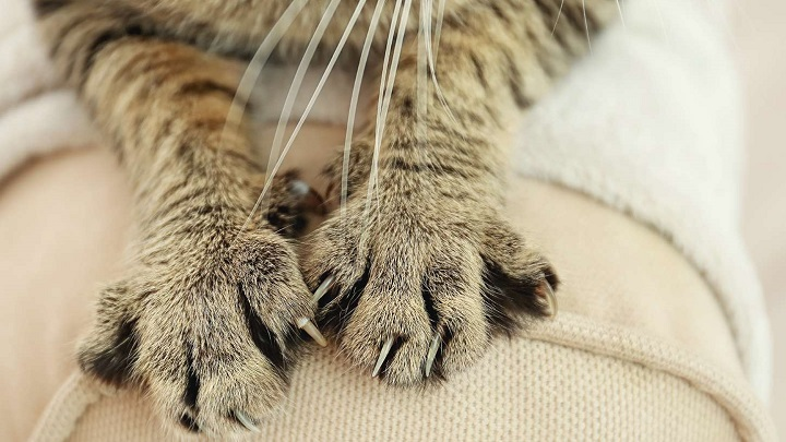 inconvenientes-gatos