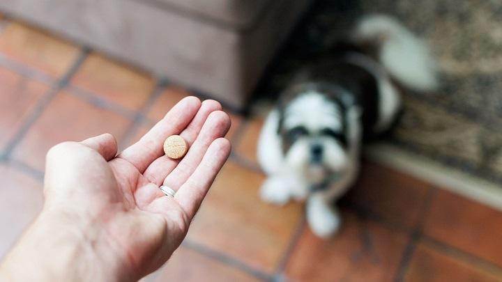 medicamentos-perros