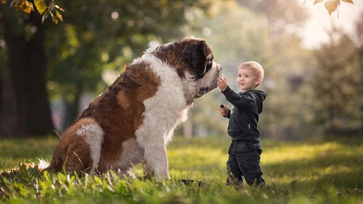 Si tu hijo quiere una mascota de cualquier tipo o estás pensando en adquirir una, lee antes el artículo pinchando en la foto y recuerda que LOS ANIMALES NO SON JUGUETES.