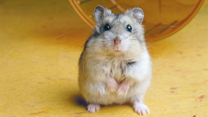 roedores-ninos1