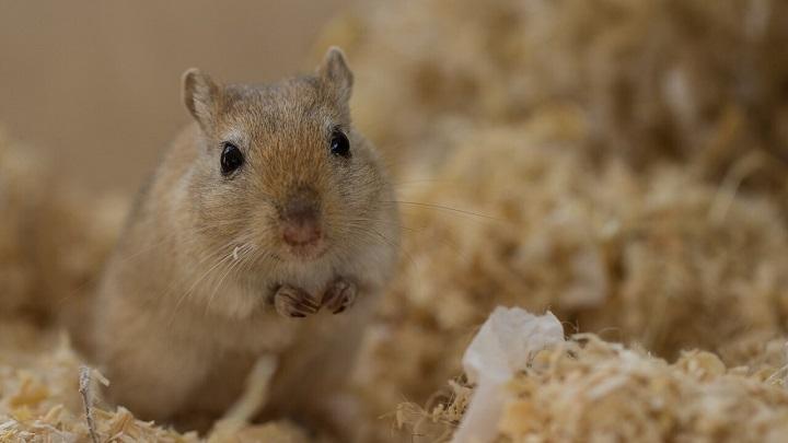 roedores-ninos5