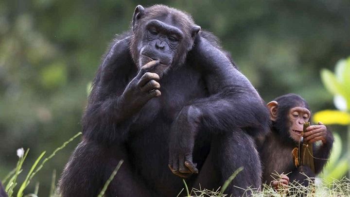 animal-inteligente1