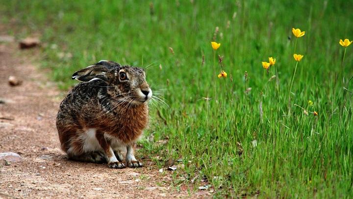 conejos-sentidos