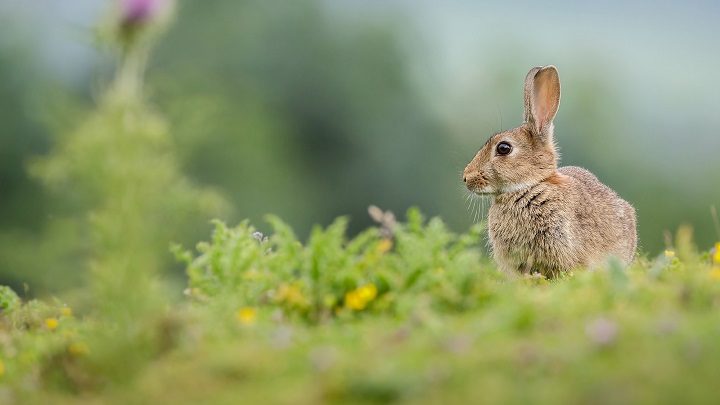 conejos-sentidos2