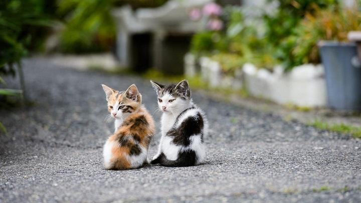 gato-feliz1