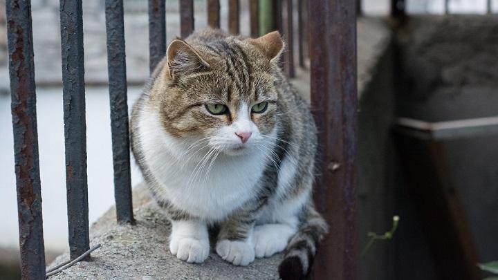 gato-alzheimer1