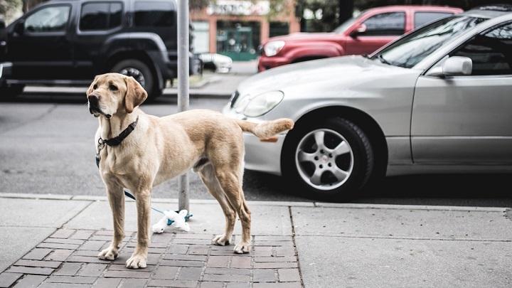 perro-alzheimer1