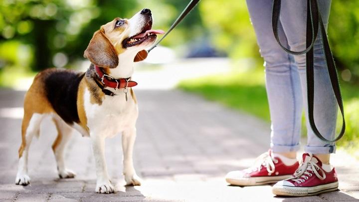perro-psicologo