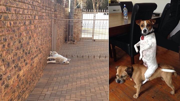 perros-haciendo-cosas-raras-foto