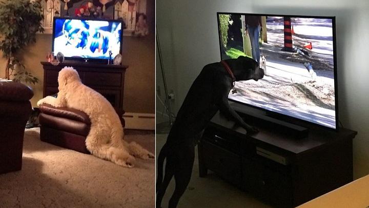 perros-haciendo-cosas-raras-foto2