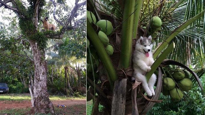 perros-haciendo-cosas-raras-foto4