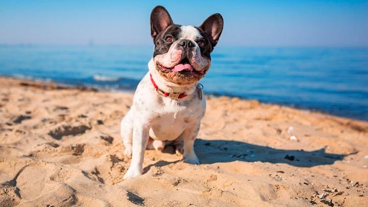 playa-perros-barcelona
